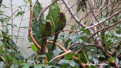 Parrots of the Tropics