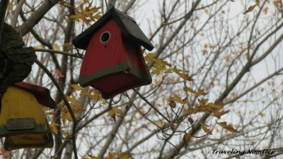 One of the Bird Houses on the trees Downtown