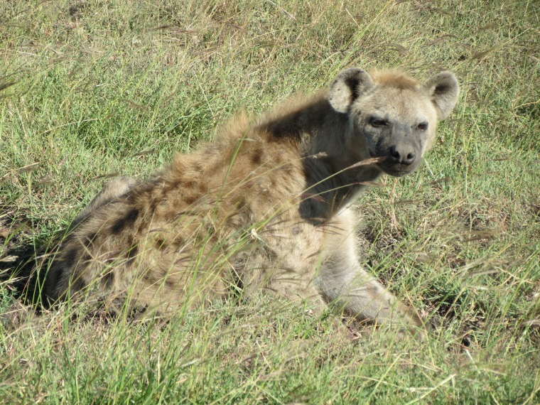 A Hyena, the most scary looking animal I have seen