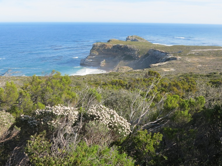 Fynbos found at Cape Point