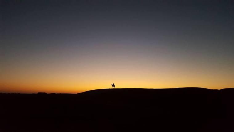 Sam Dunes Lone camel
